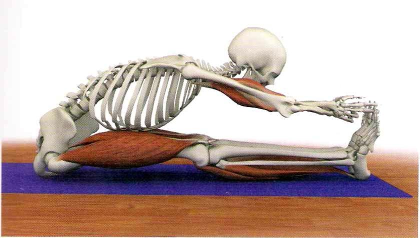 Yoga é ciência